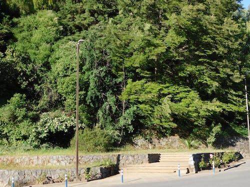 Free stock photo of árboles