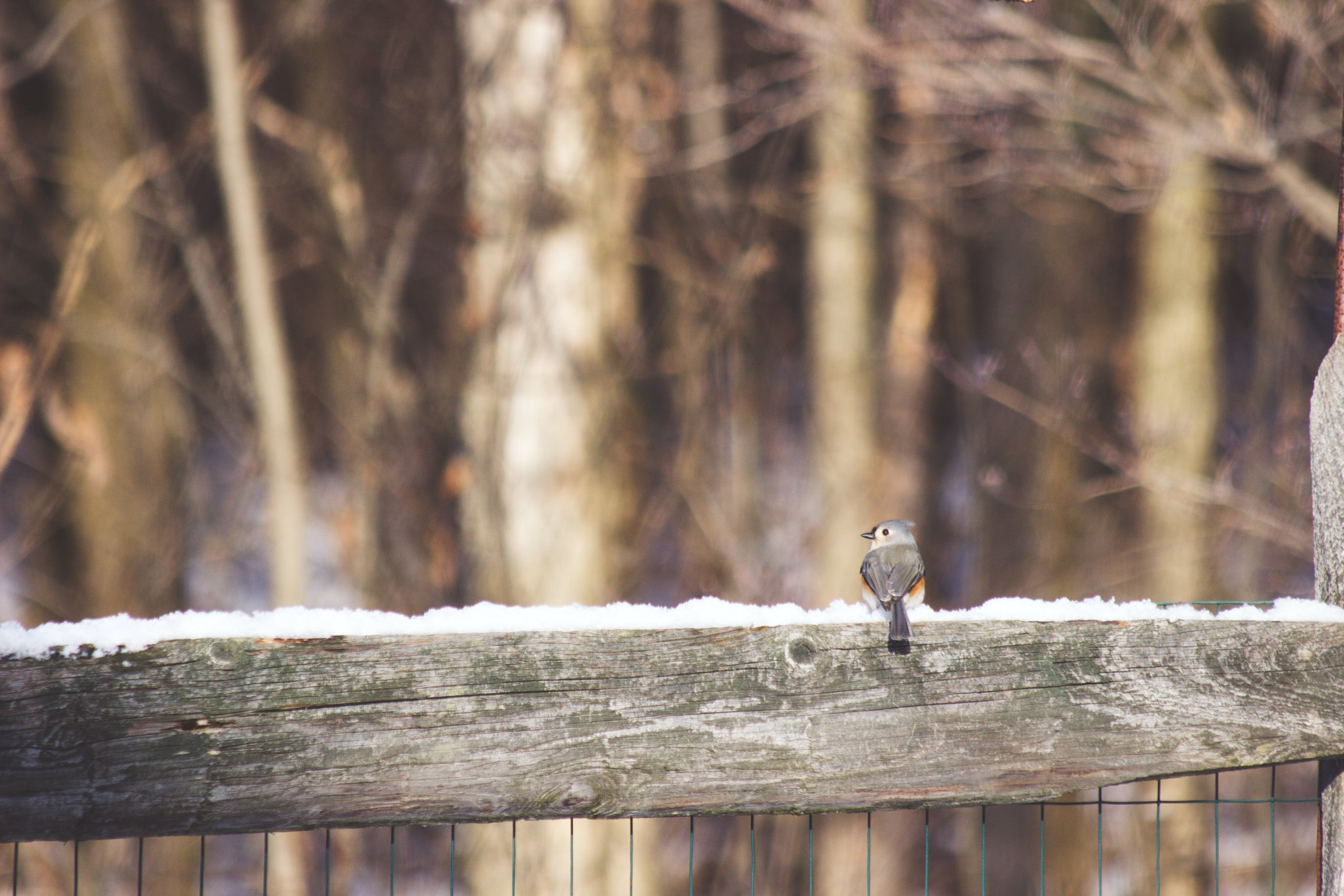 Free stock photo of snow, bird, winter, outside