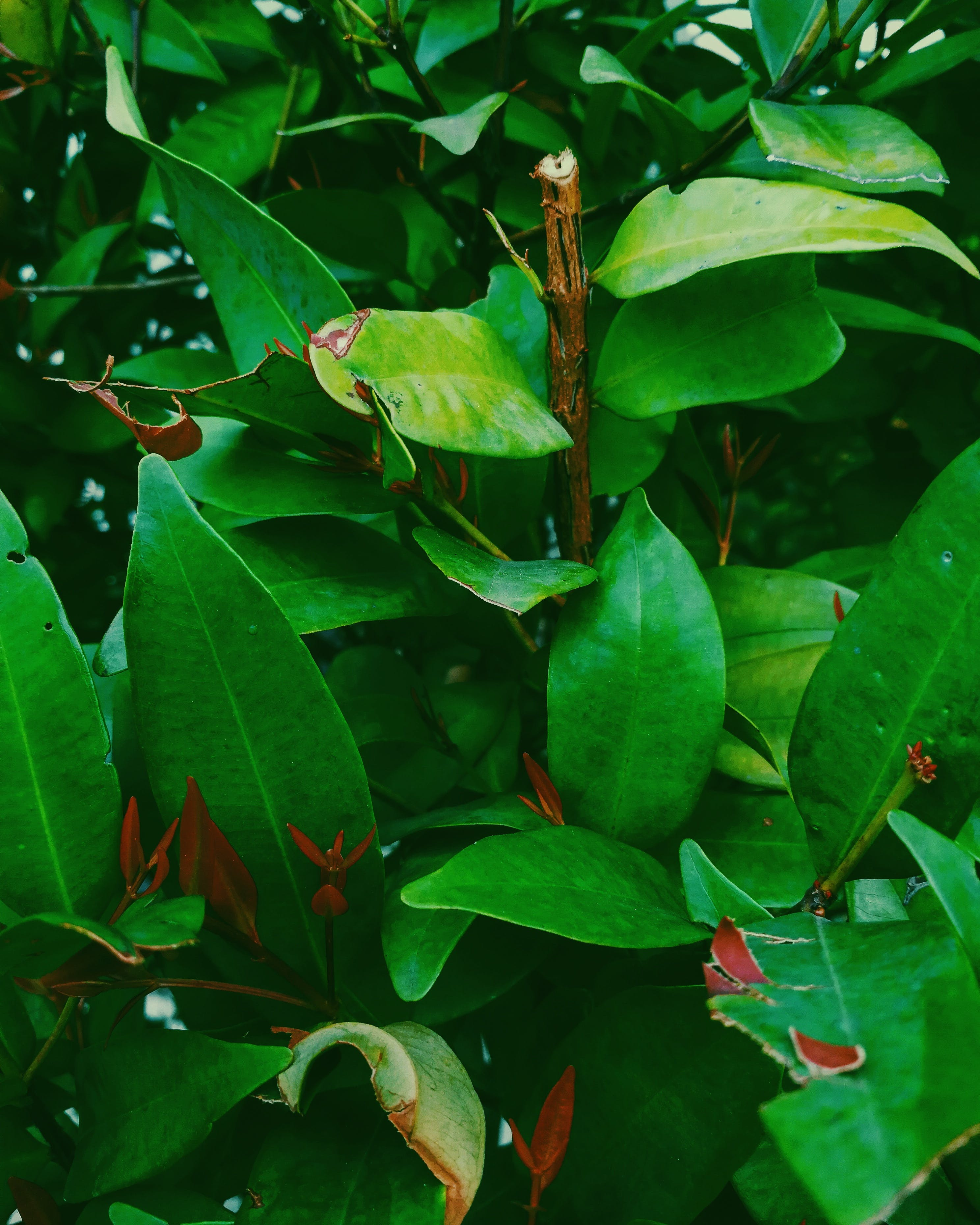 Green Leaf Plant With Brown Branch