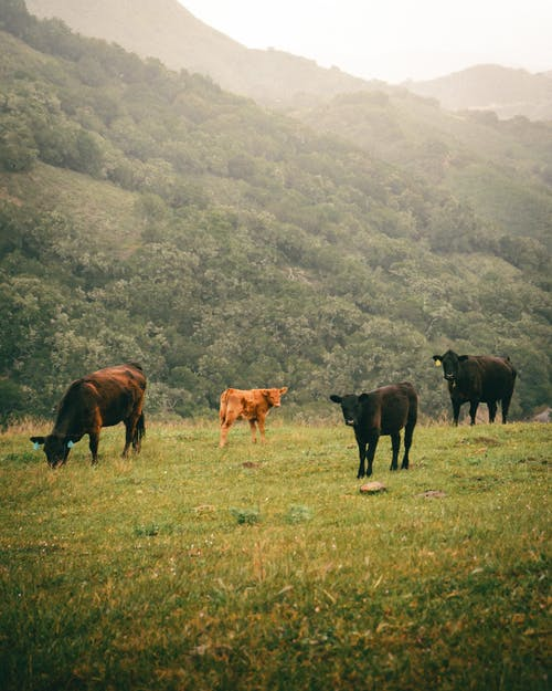 Horses Eating Grass on Green Grass Field