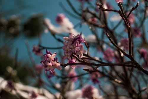Photos gratuites de arbre, bourgeon, bouton