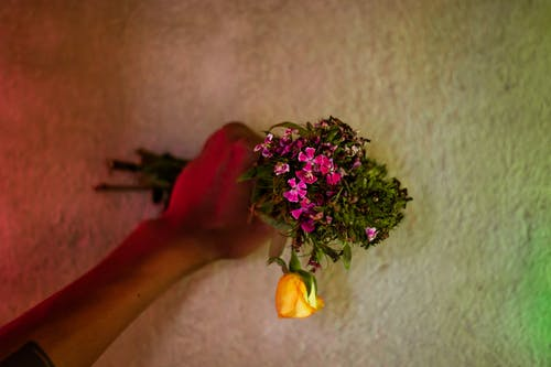 Photos gratuites de amour, couleur, femme