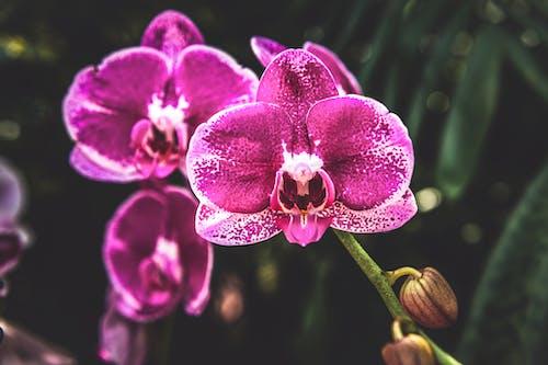Gratis arkivbilde med blad, blomst, blomsterblad