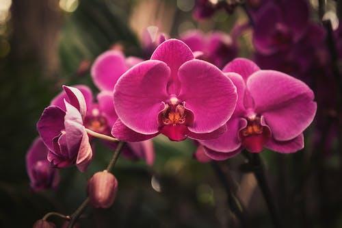 Kostnadsfri bild av blad, blomma, blomning