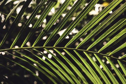 Kostnadsfri bild av abstrakt, blad, dagg