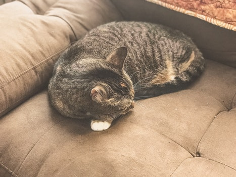 Silver Tabby Cat Sleeping on Gray Sofa