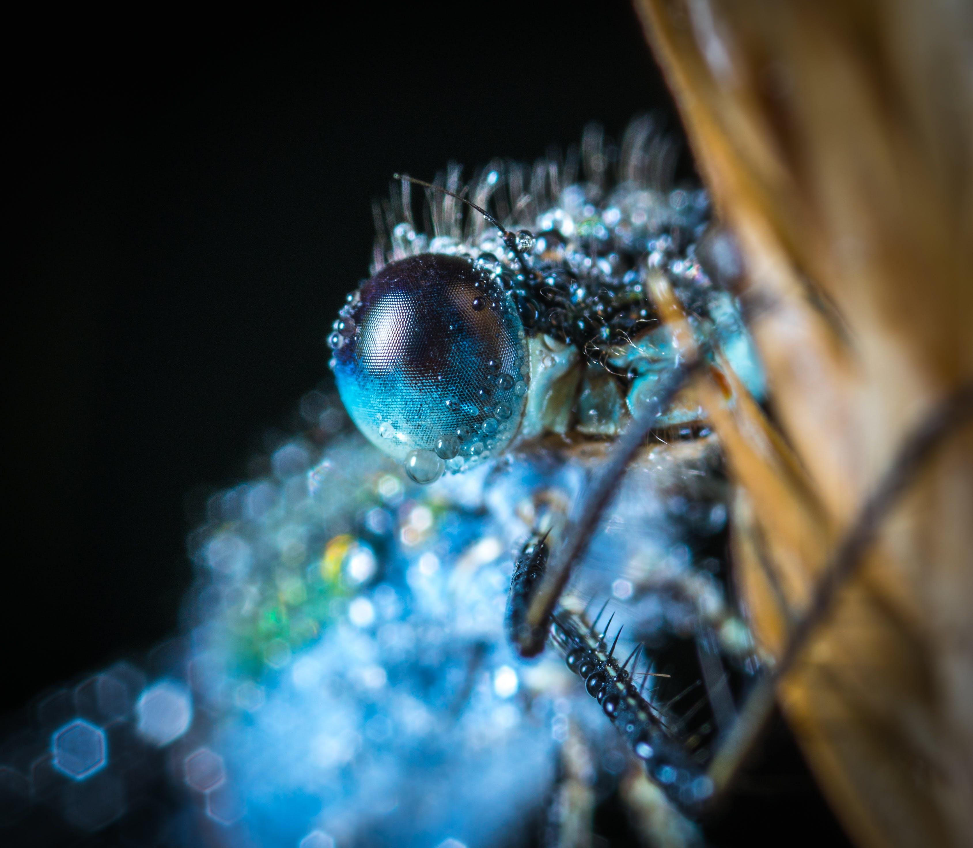 Blue Damselfly Macro Photography