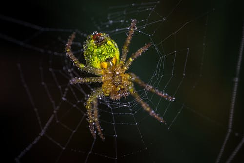 Yellow and Green Spider