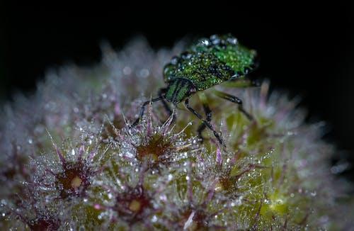 açık hava, Bahçe, bitki örtüsü, Biyoloji içeren Ücretsiz stok fotoğraf