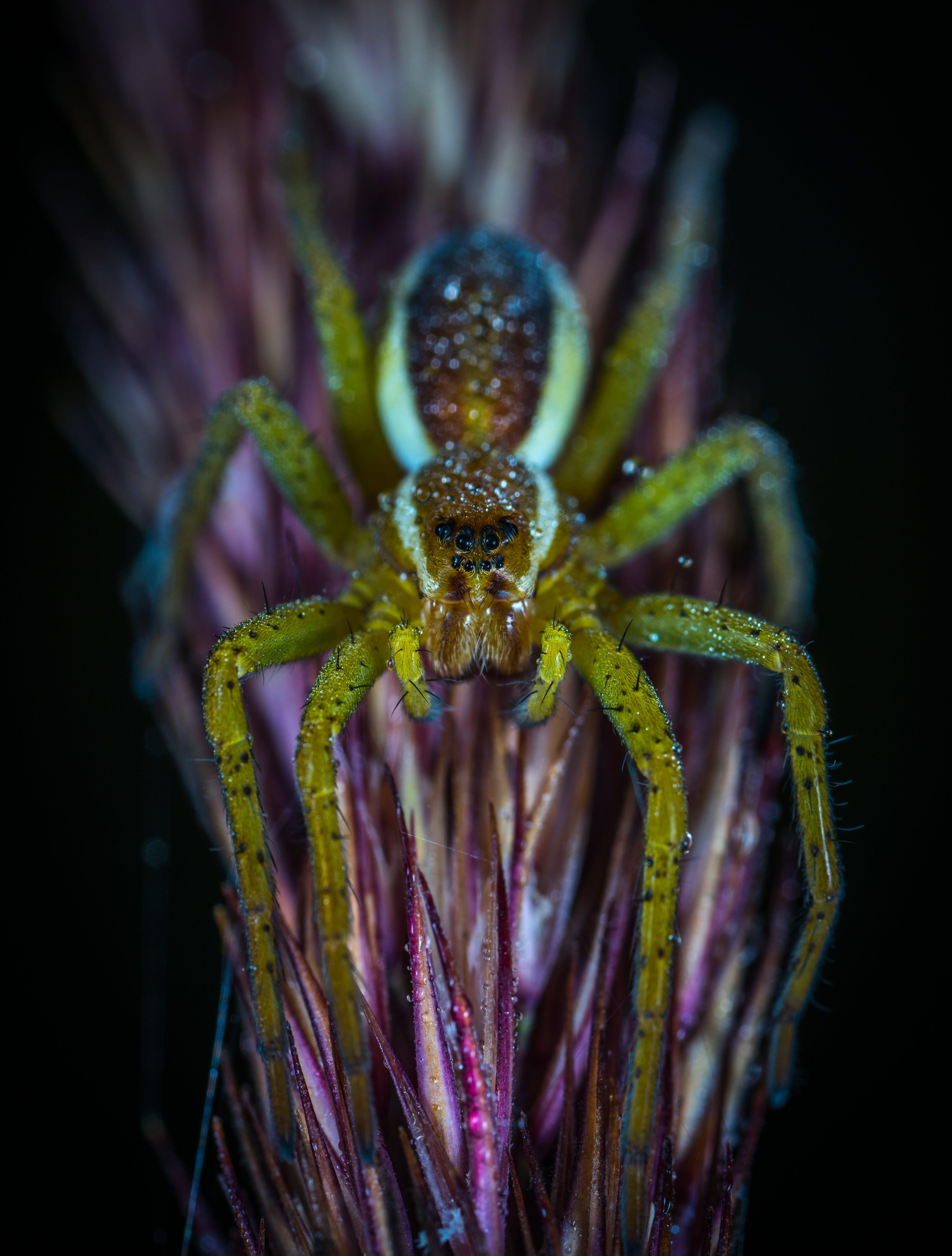 Kostenloses Stock Foto zu biologie, blume, hell, insekt