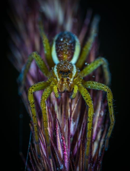 Gratis stockfoto met angstaanjagend, beest, biologie, bloem
