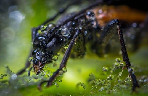 Fotografía Macro De Escarabajo Marrón Con Gotas De Rocío