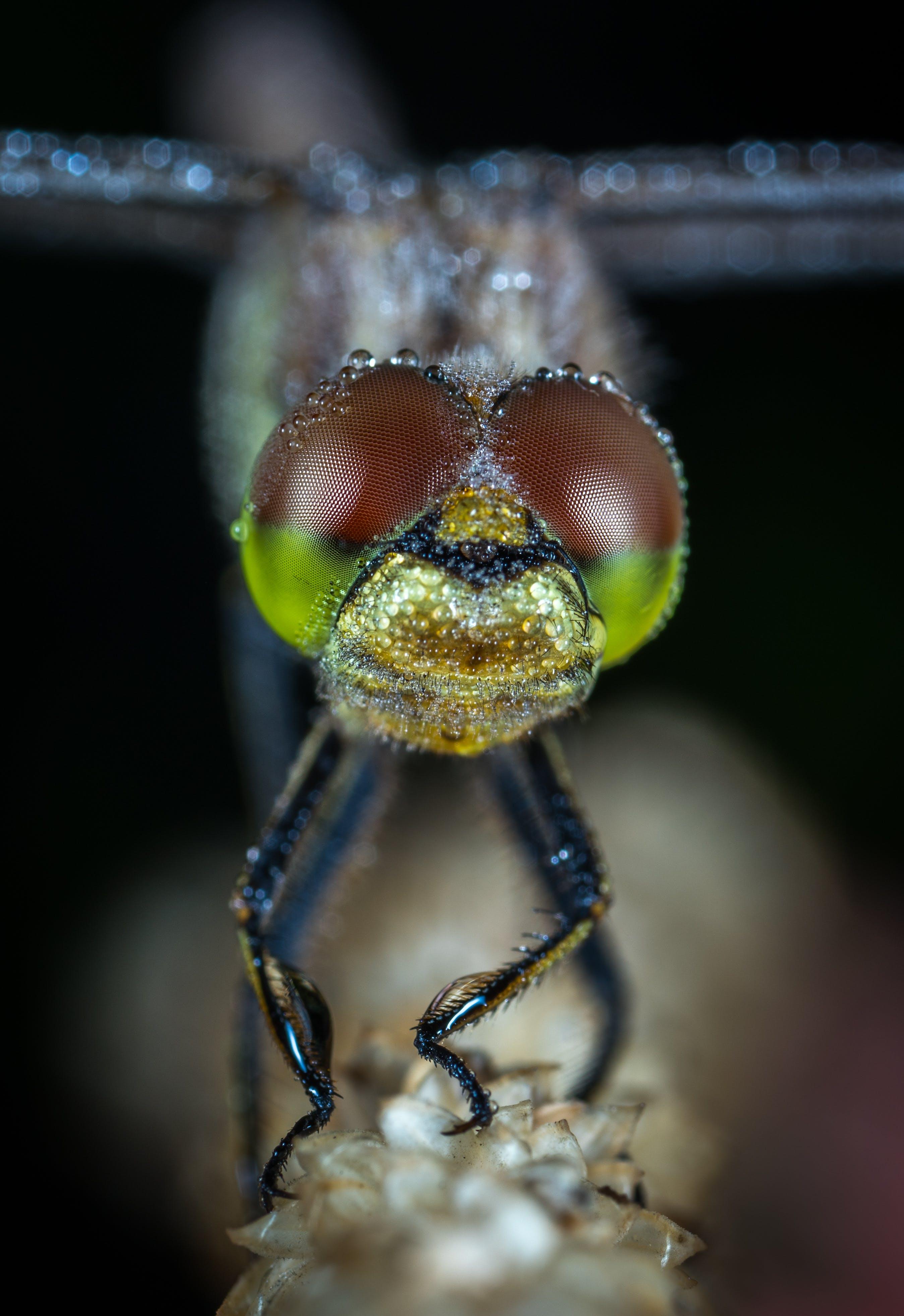 곤충, 곤충학, 눈, 동물의 무료 스톡 사진