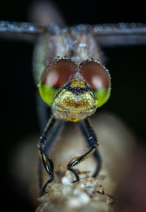 Immagine gratuita di acqua, animale, bagnato, entomologia