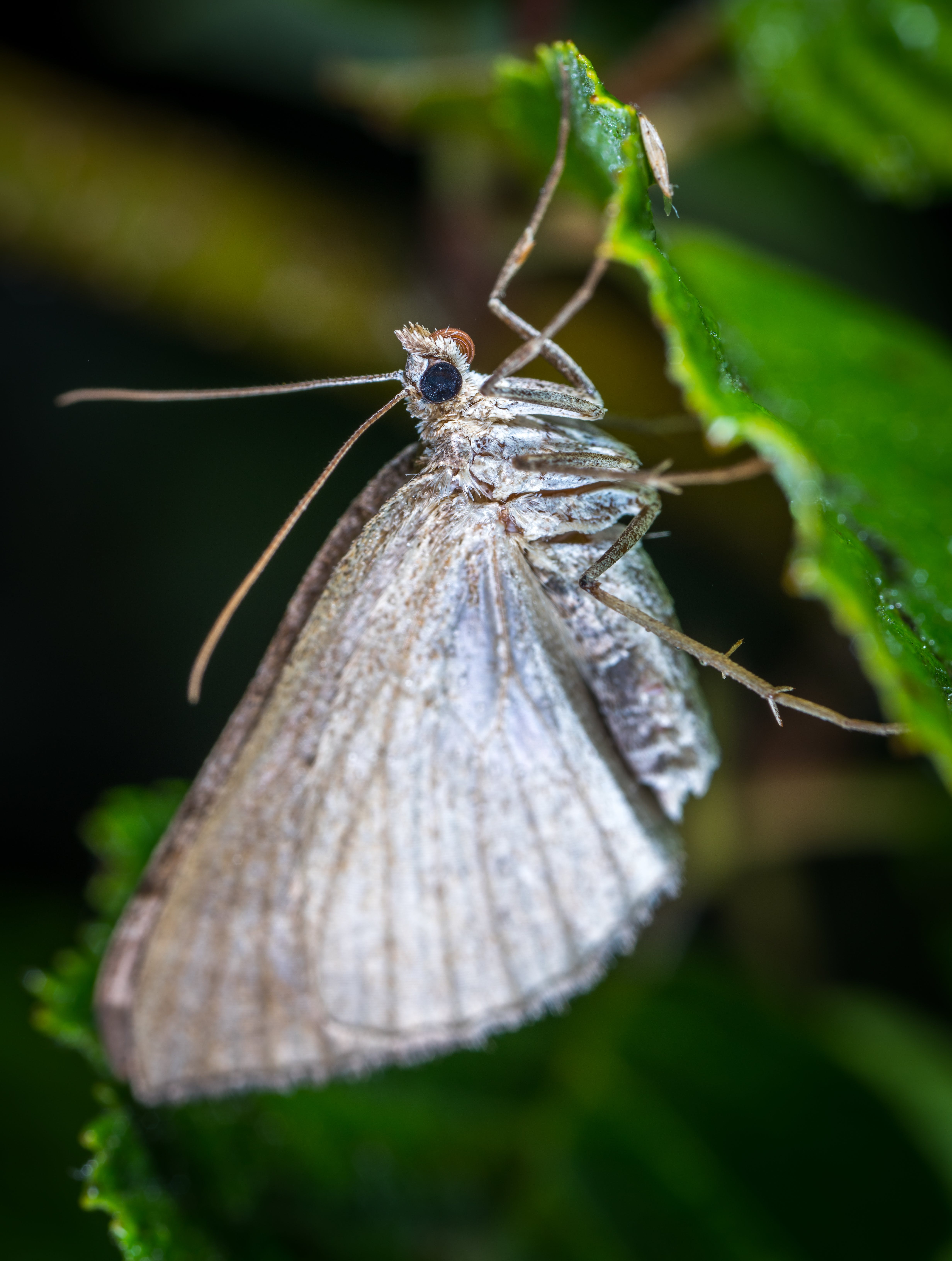 Gray Butterfly in Closeup Photo