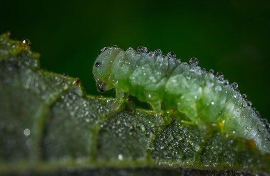 Free stock photo of dew, insect, macro