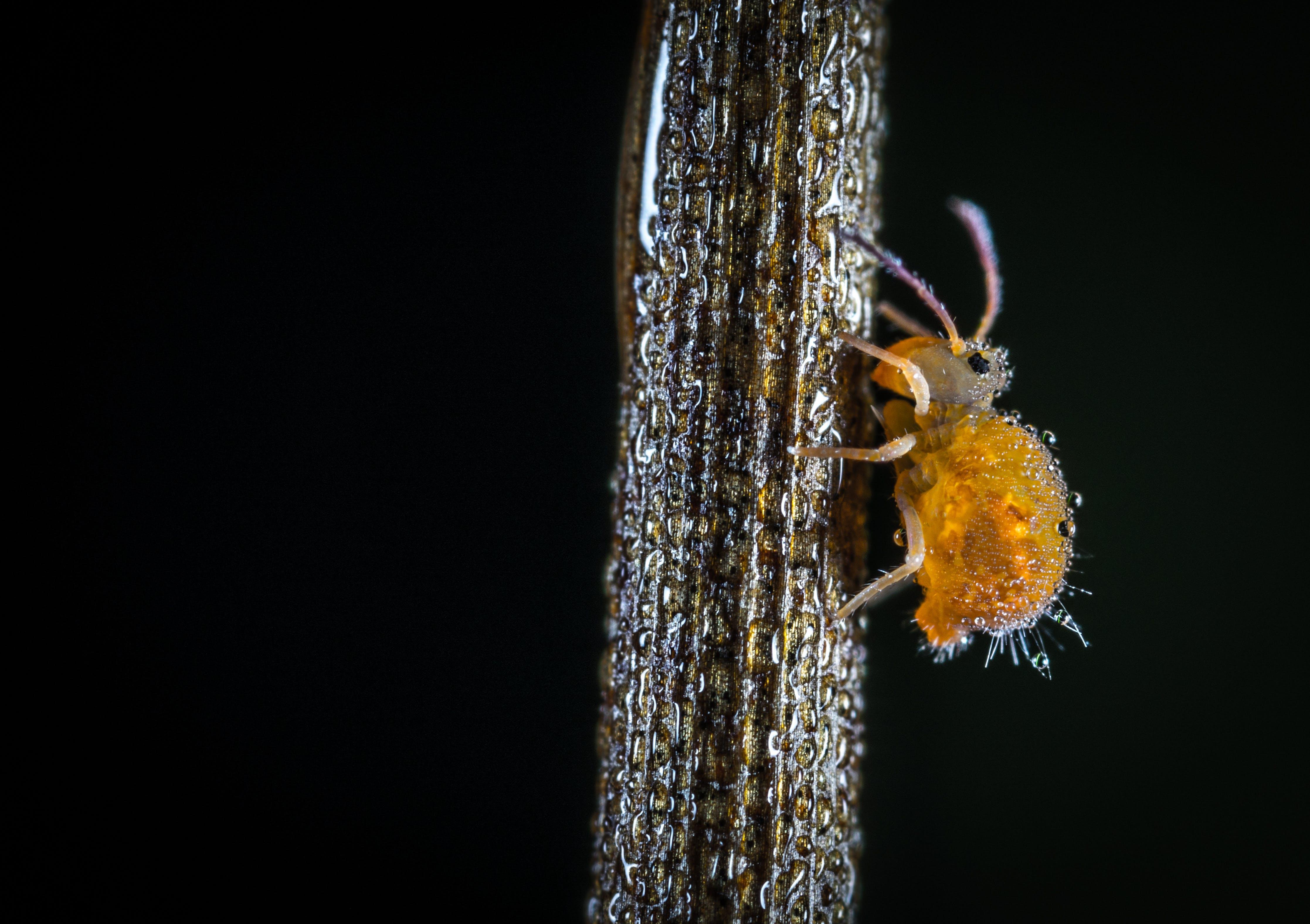 Macro Shot of Yellow Crawling Insect