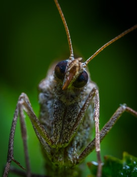 Brown Insect in Closeup Photo