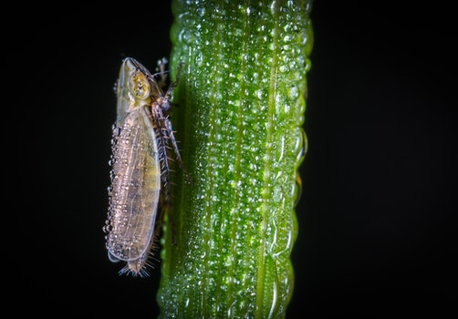 Macro Photography of Froghopper On Leaf
