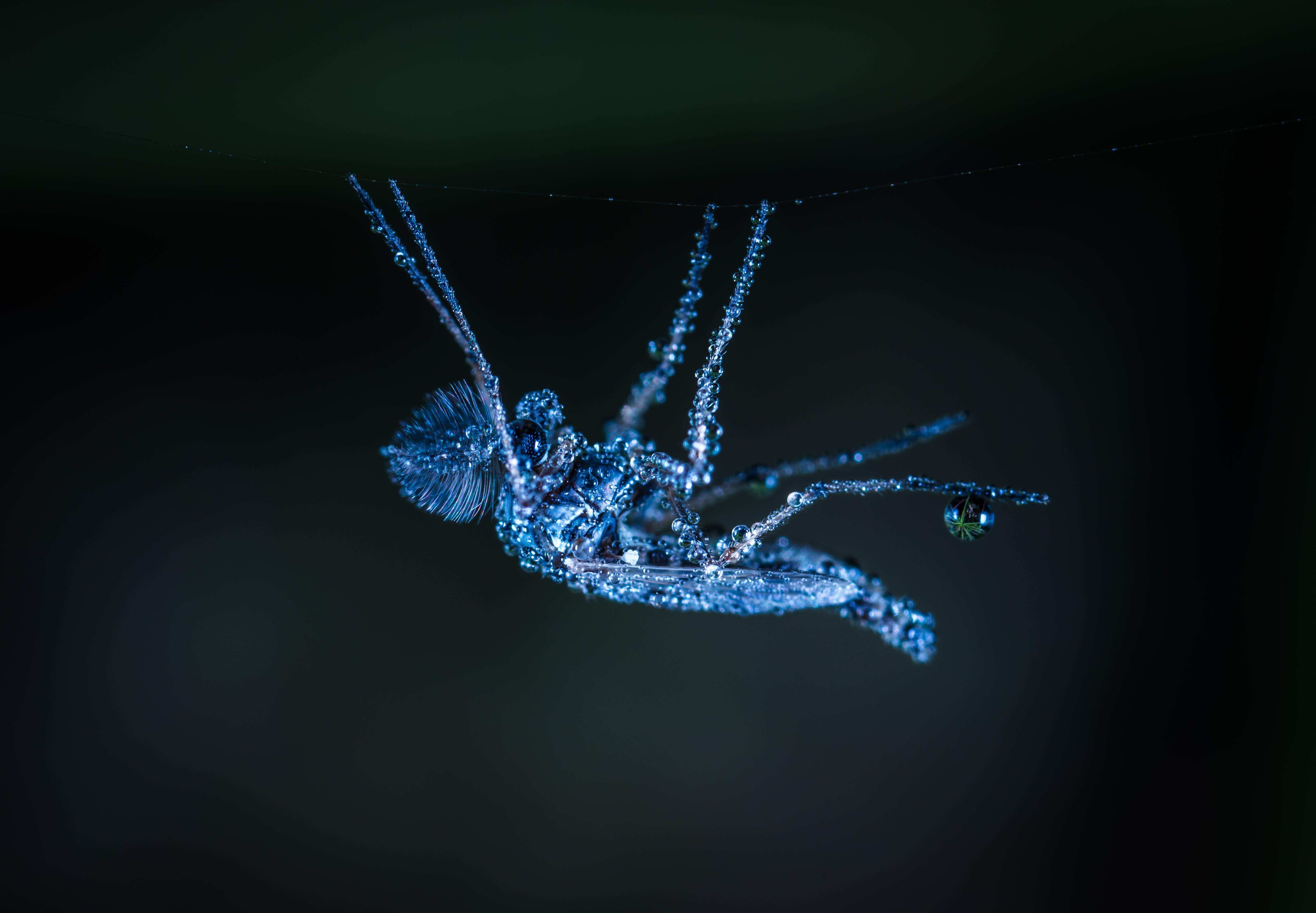 Macro Shot of Gray Crawling Insect