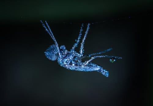 Бесплатное стоковое фото с беспозвоночный, Биология, вода, глубина резкости