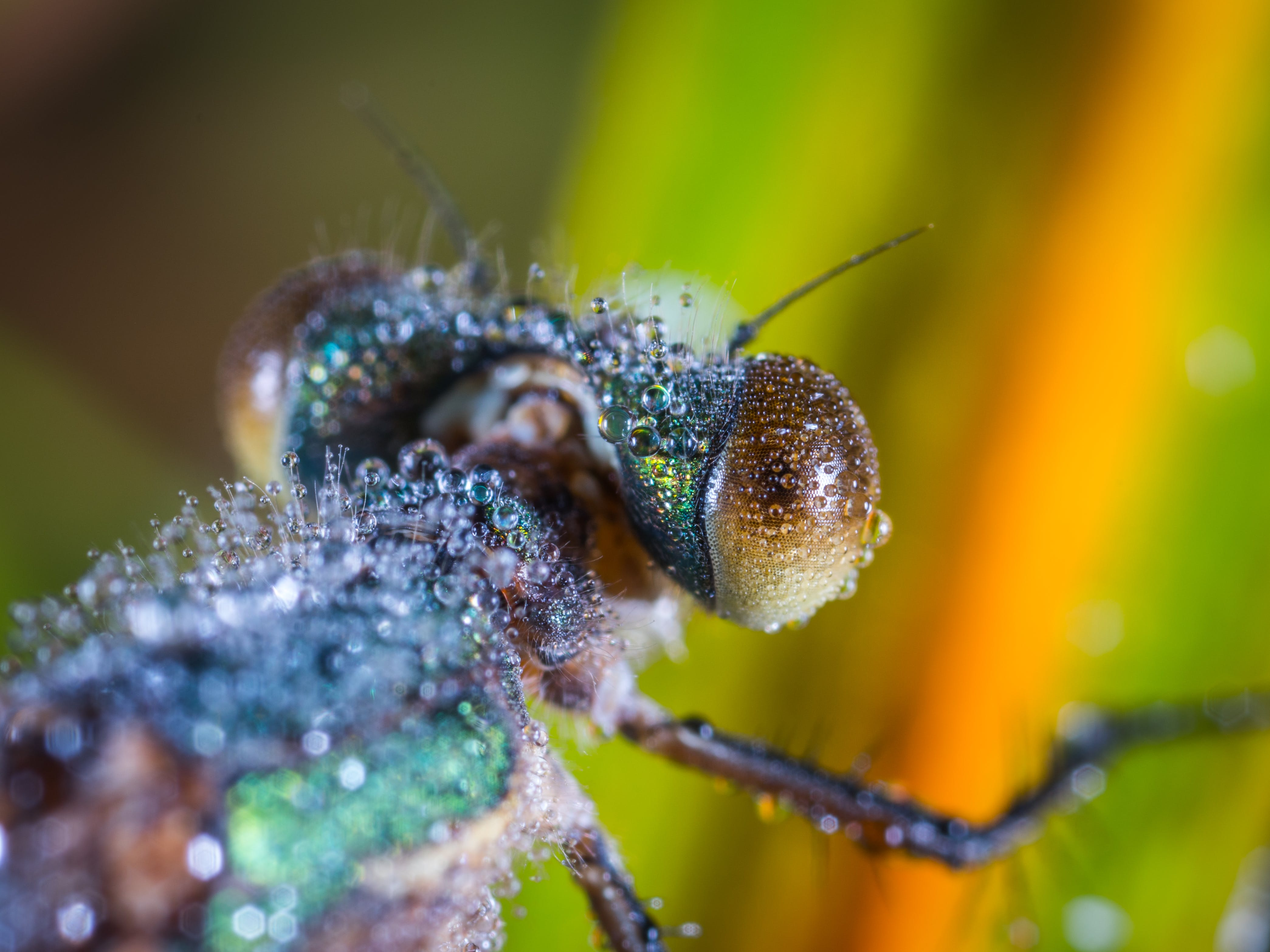 Tilt Shift Lens Photography of Brown and Black Insect