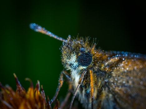 Free stock photo of dew, insect, macro, butterfly