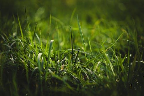 Immagine gratuita di alba, all'aperto, campo
