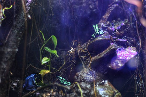 Gratis stockfoto met kikker, kleuren