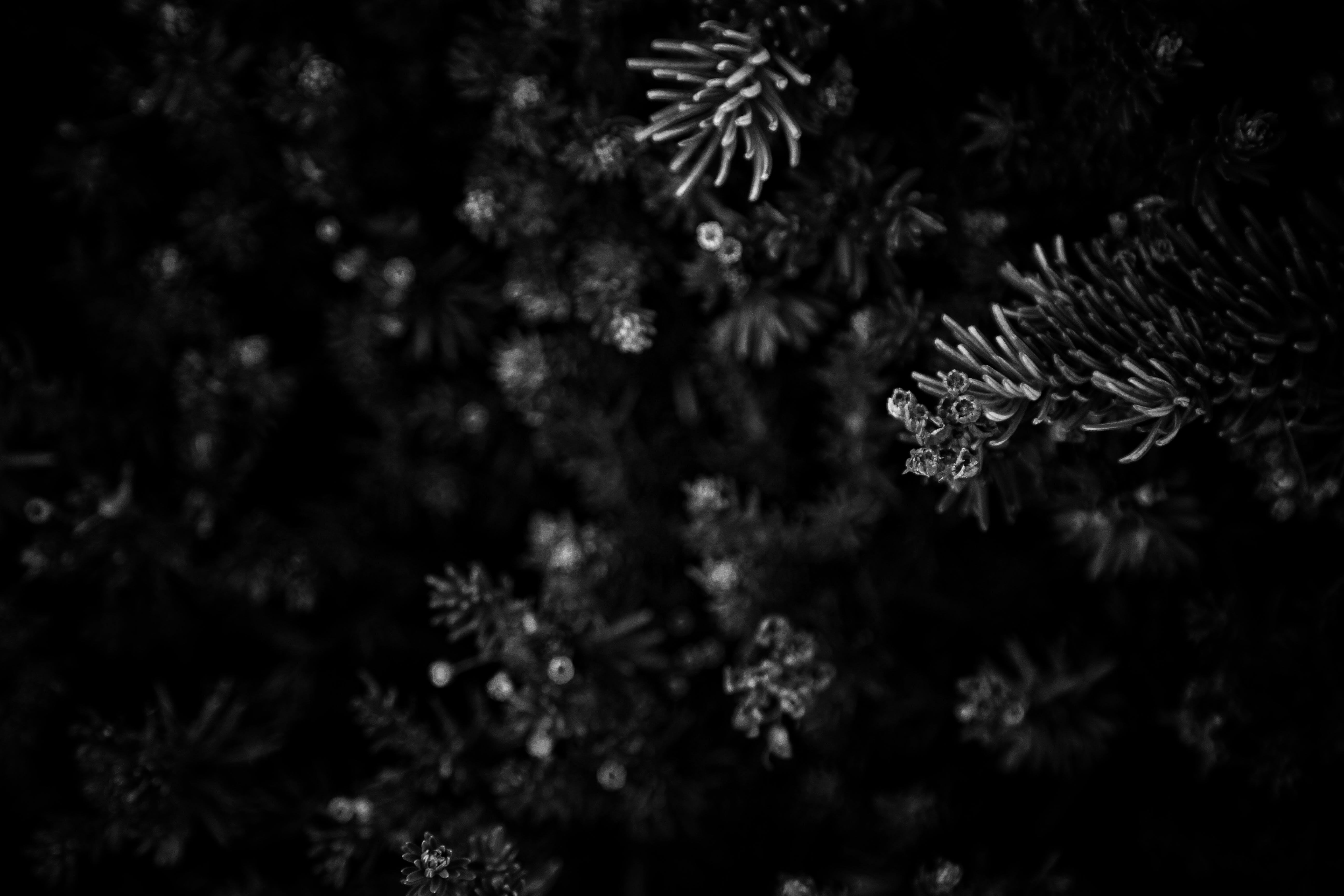 Základová fotografie zdarma na téma černobílá, černobílý, hloubka ostrosti, rostlina