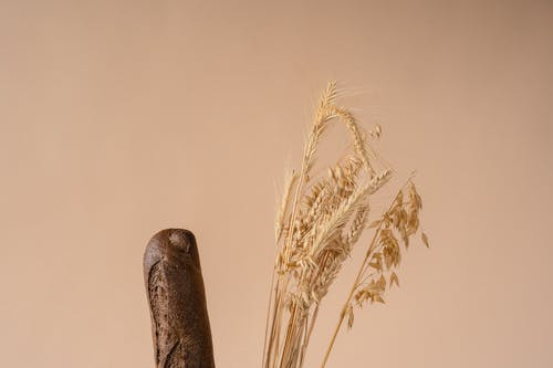 Brown Wheat Plant on Brown Wooden Stick