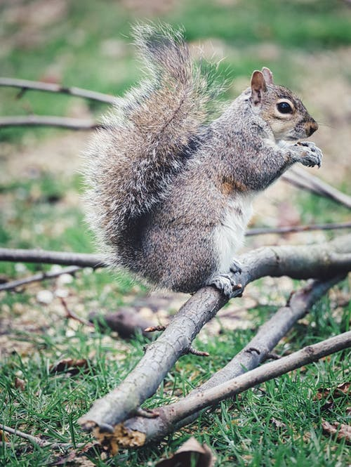 Free stock photo of animals in the wild, cute animal, green park