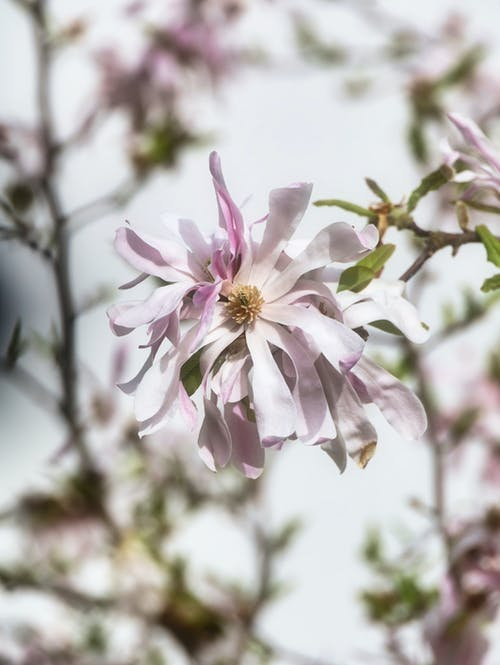 Free stock photo of bloom, blossom, flower