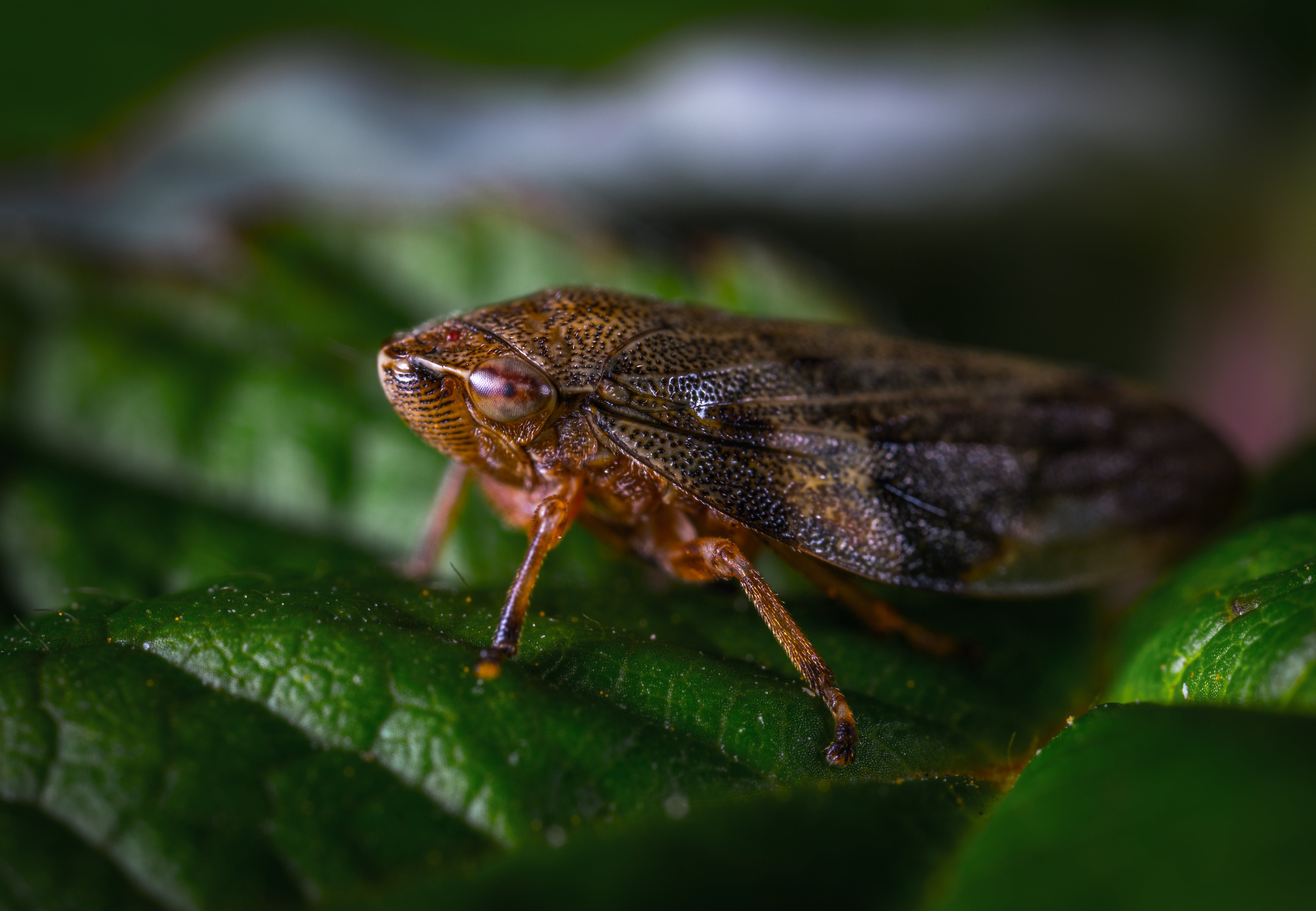 Close-up Photography Of Insect