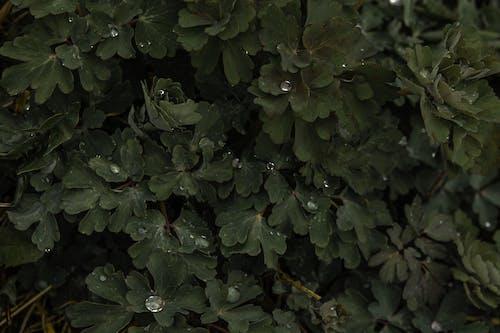 Photos gratuites de à feuilles persistantes, abstrait, arbre