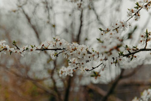 Photos gratuites de apple, arbre, branche