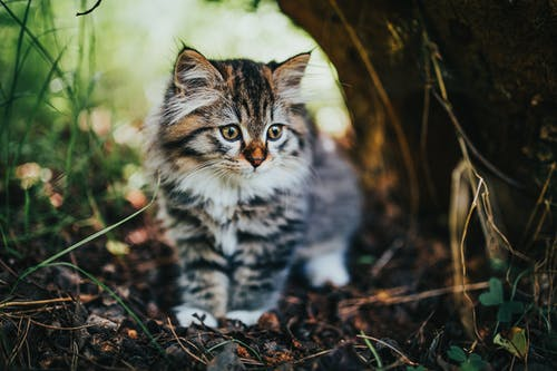 Adorable kitty standing near tree