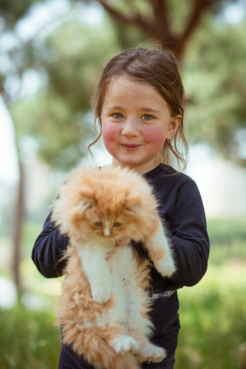 Foto stok gratis alam, anak, anak kucing