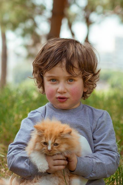 Ilmainen kuvapankkikuva tunnisteilla eläin, epäselvä tausta, halaus