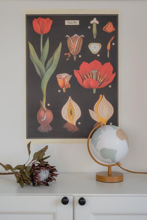 Foto stok gratis bumi, bunga, bunga kering