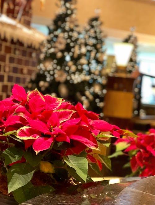 Ingyenes stockfotó dekor, Karácsonyi dekoráció, karácsonyi díszek, szilveszter témában