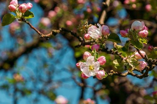คลังภาพถ่ายฟรี ของ woodlet, กลางแจ้ง, กลีบดอกไม้