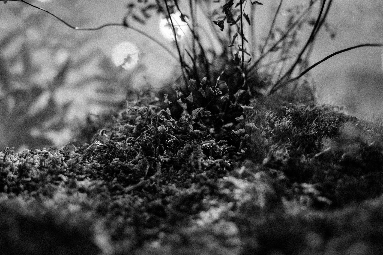 Free stock photo of moss, plant, white, black