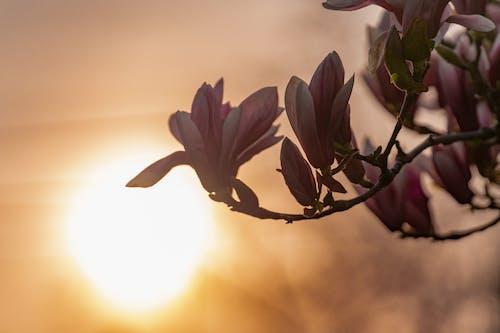 Free stock photo of 4k resolution, 4k wallpaper, beautiful flower