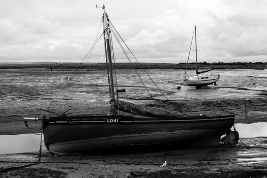 Free stock photo of creek, mud, black and-white, endeavour