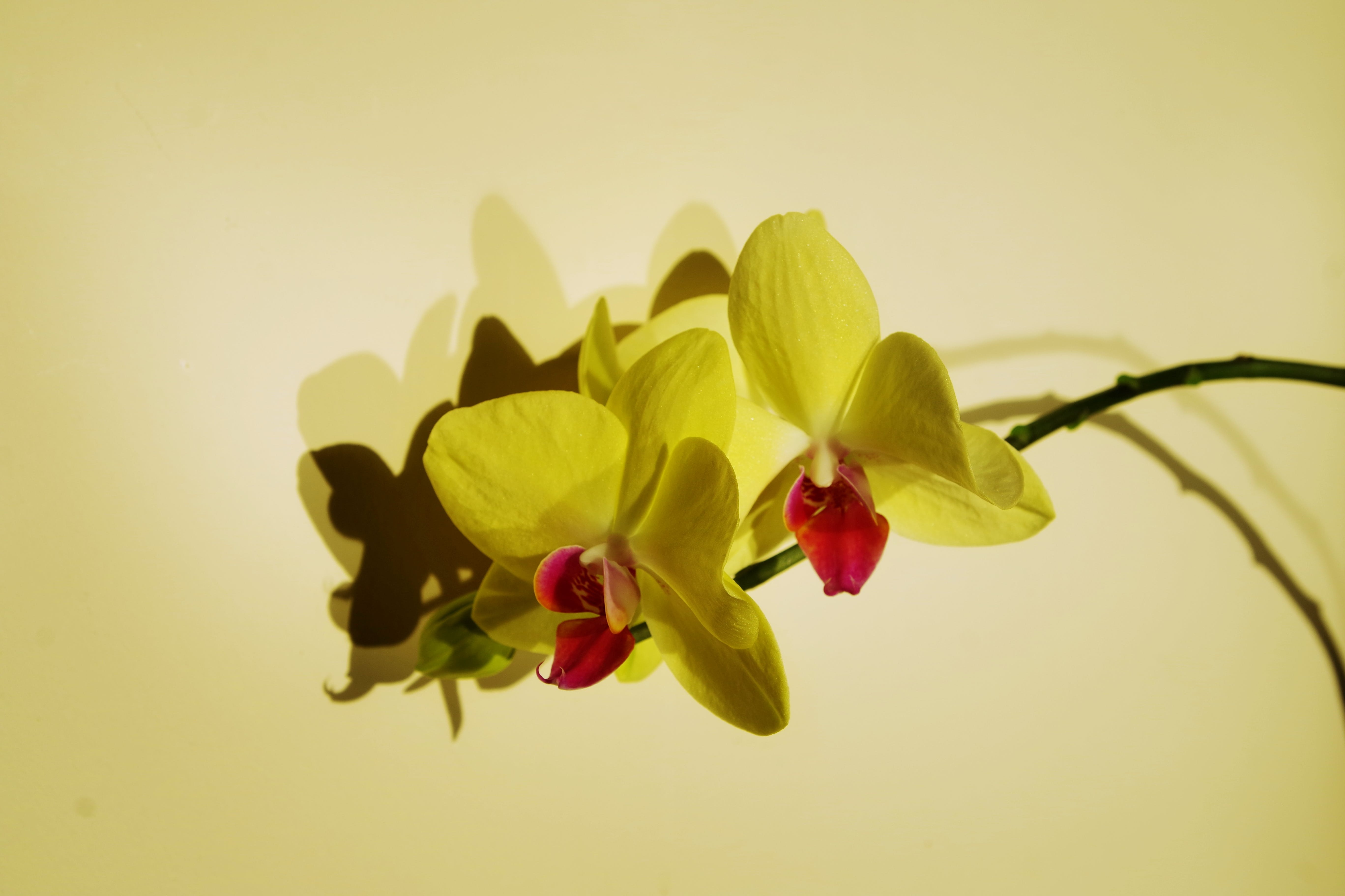 Close-up Photo of Orchids