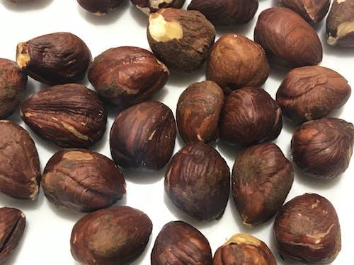 Free stock photo of hazelnuts