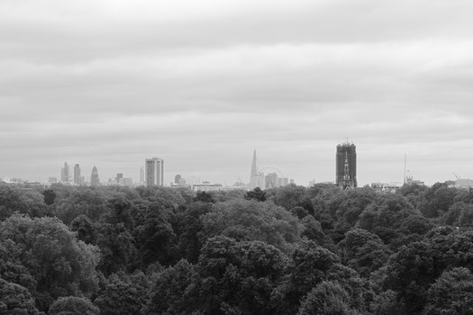 Pine Tress and High Building in Grayscale Photo