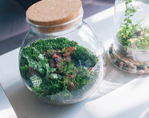 Free stock photo of alternative, bowl, cannabis