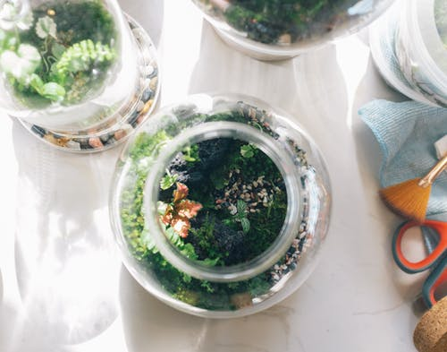 Green Plant in White Round Ceramic Pot